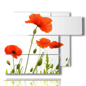 painting with stylized photo red poppies
