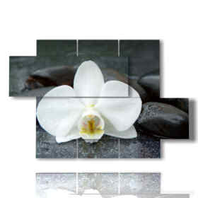 quadri moderni con orchidee bianche e sassi neri