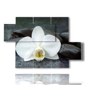 tableaux modernes avec orchidées blanches et pierres noirs