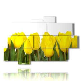 tulipes tableaux colorent le soleil