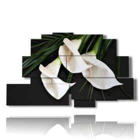 white callas Bilder