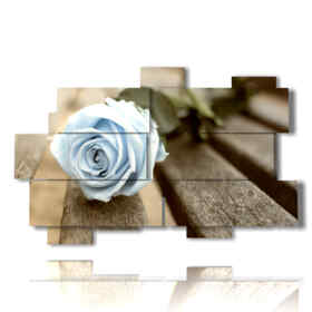 Bild von blauen Rosen als Sommerhimmel