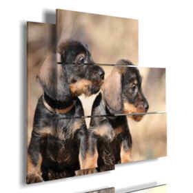 cuadro con fotografías perros pequeños