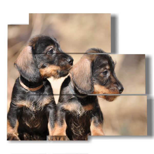 painting with pictures small dogs