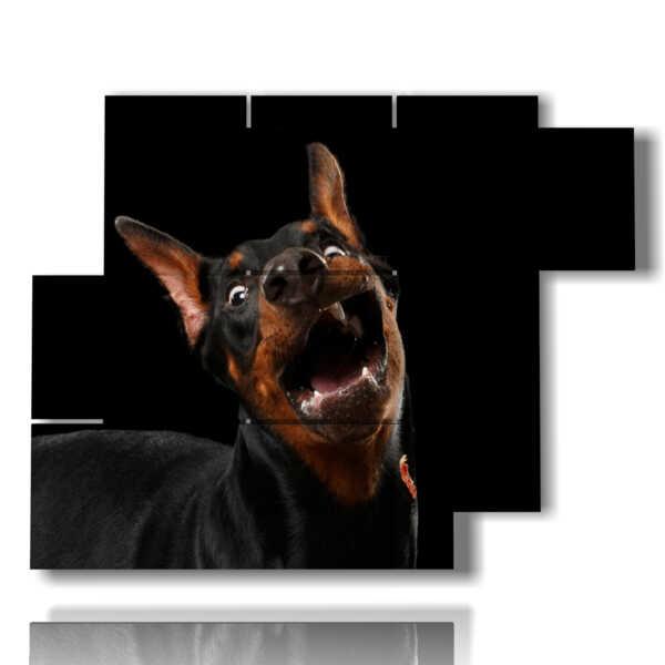 cuadro con los perros grandes y fotos divertidas