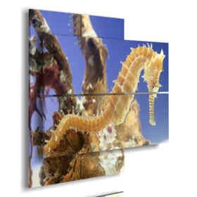 quadri astratti con pesci cavallucci marini