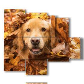 quadro con foto di cani divertenti