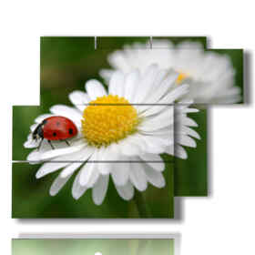 picture with photo ladybug and white daisies