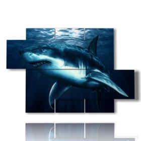 quadro di pesce con grande squalo nuotante