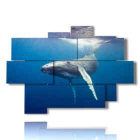 quadro di pesci e balena sott