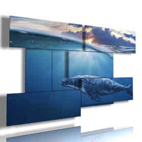 quadri pesci tropicali e balena a mezz