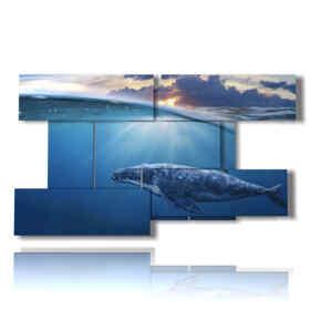 tableaux de poissons tropicaux