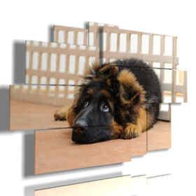 perro pequeño en imágenes