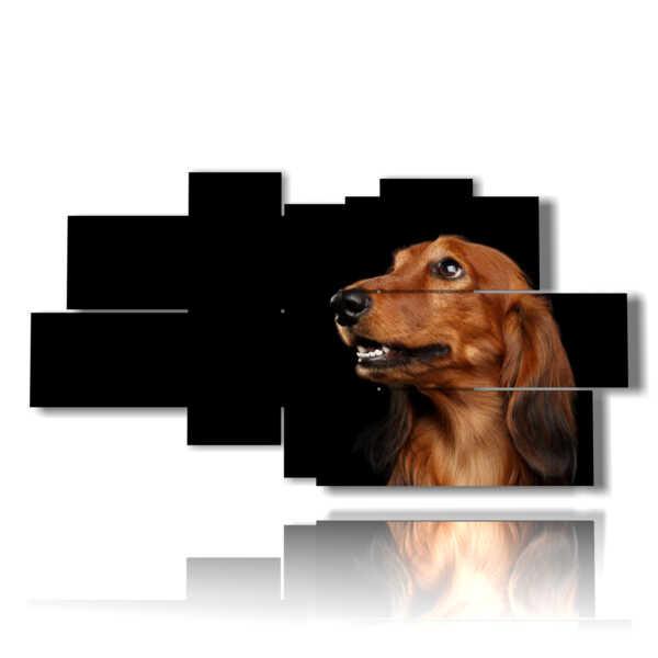 cuadros con las fotos de perros de raza pura