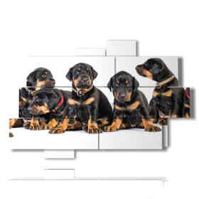 quadro con foto di cani cuccioli