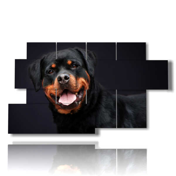 picture with photos of dog