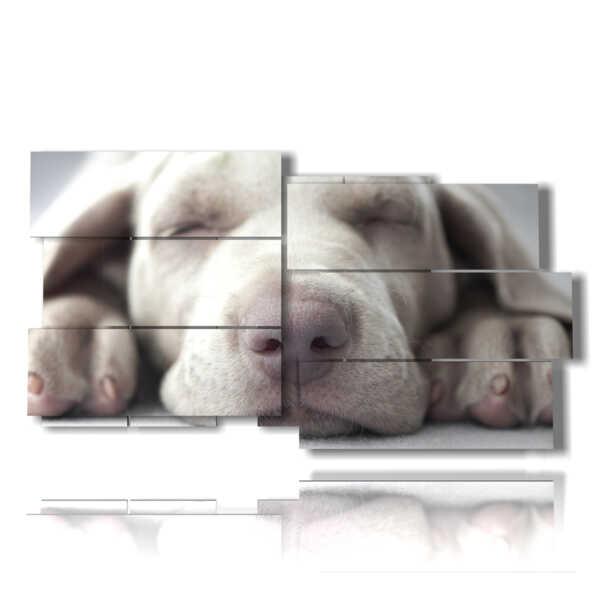 cuadro con fotos de perros pequeños