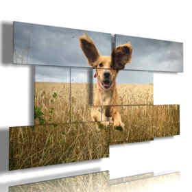 cuadro con fotografías perros lindos