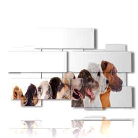 quadro con foto di cani disegnati