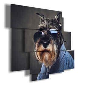cuadro con fotografías perros con gafas