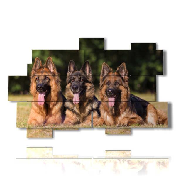 cuadro con fotos de perro con la lengua fuera