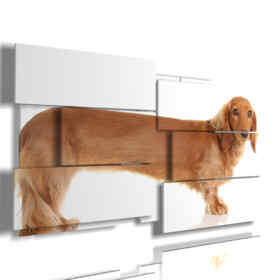 painting with dachshund dog photo