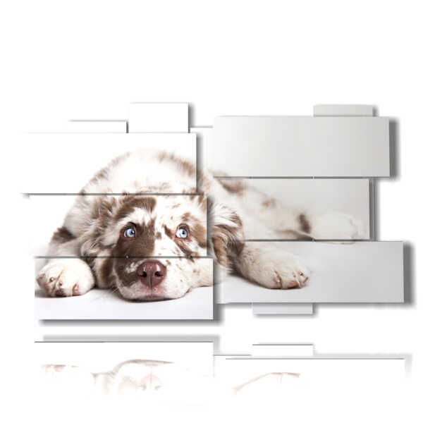 picture with photos of beautiful dogs