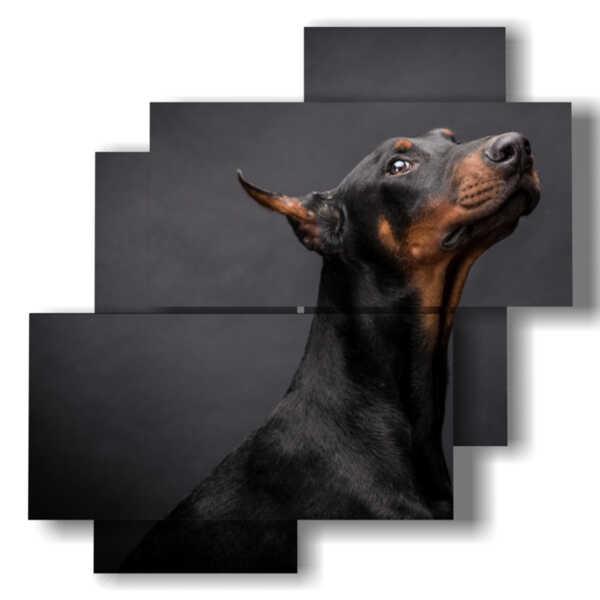 cuadros perros nobles reflexivo