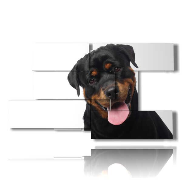 cuadro con fotos de raza perros