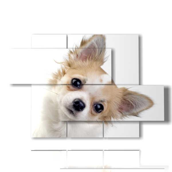 cuadro con fotos Los perros pequeños