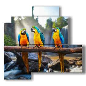 quadri con uccelli pappagalli