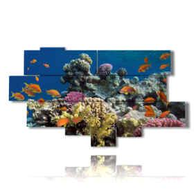 quadro con pesci tropicali