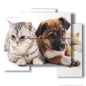 Tableaux modernes avec des amis des chats et des chiens