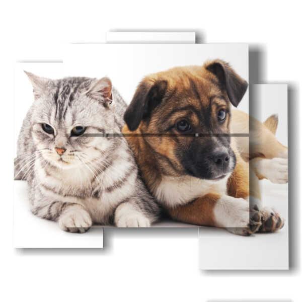 cuadros con perros y gatos amigos