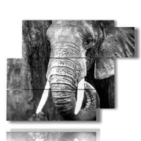 tableaux de photos artistiques éléphants