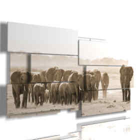 African elephants images in paintings