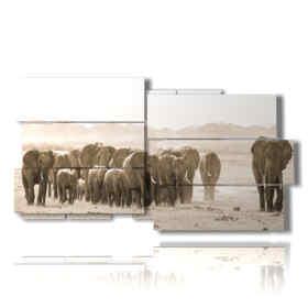 Elefantes africanos imágenes en cuadros