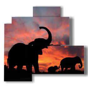 quadro con immagini elefante di profilo
