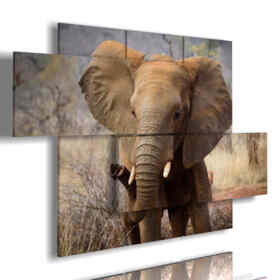 tableaux avec des tableaux d'éléphants tristes