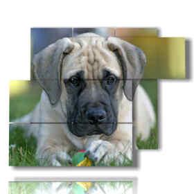 quadro con cane e pallina