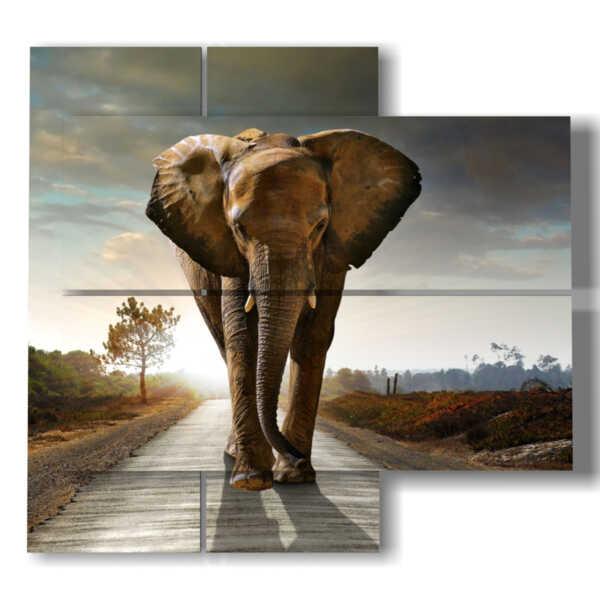 tableaux avec des tableaux d'éléphants de couleur