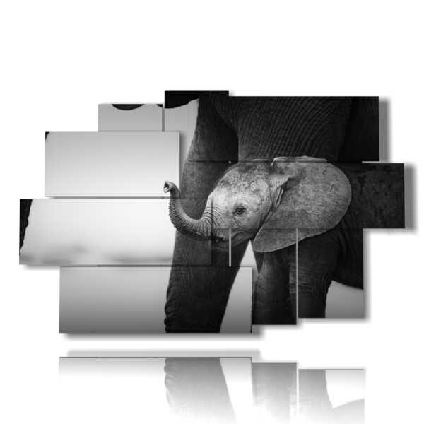 cuadros con elefante Dumbo fotos