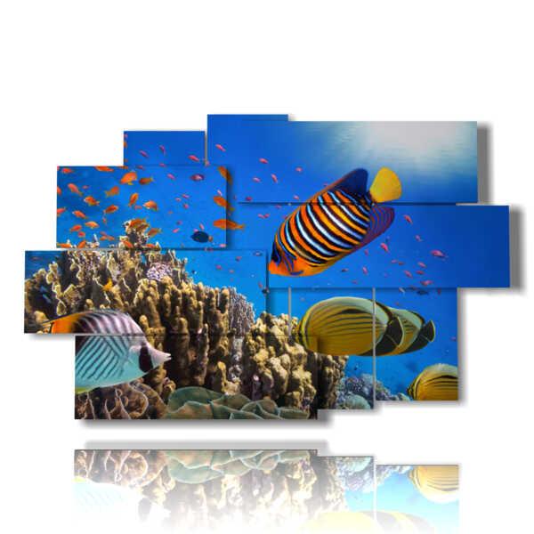 quadri di pesci della barriera corallina