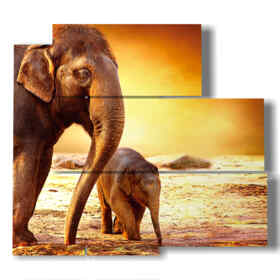 cuadros modernos elefantes con la familia
