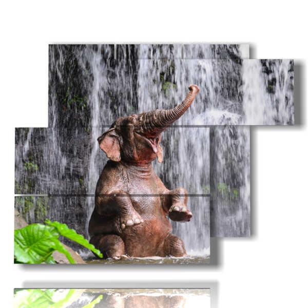 cuadro con la imagen del individuo divertido elefante
