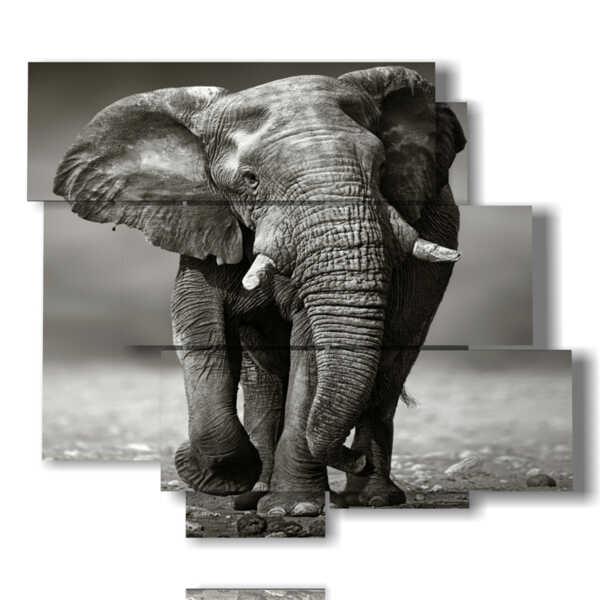 cuadro con fotografías elefantes de la India