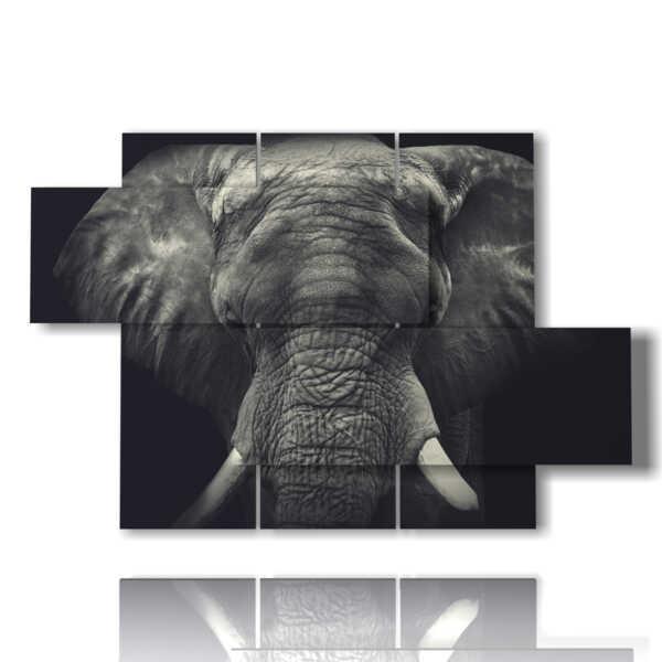 tableaux avec l'image de l'éléphant