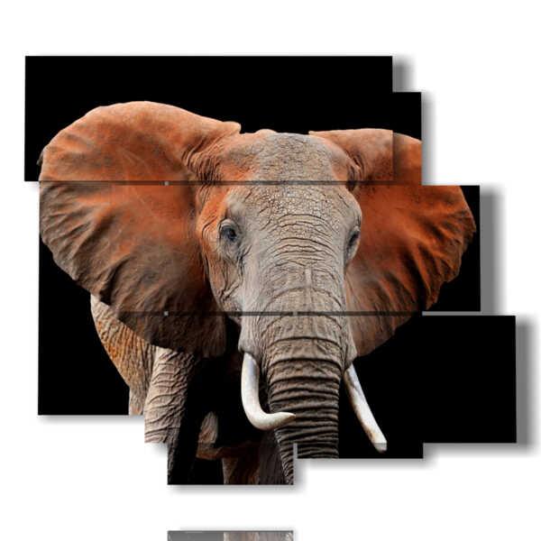 cuadro con imágenes de colores elefantes