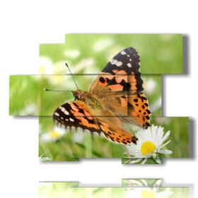 quadri sulle farfalle in un prato di margherite