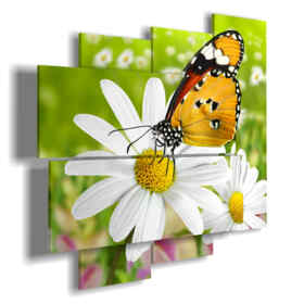Butterflies in daisies pictures